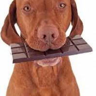 Carob versus Chocolate