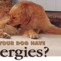 Exotic Alternative Dog Treats choices for Allergic Dogs